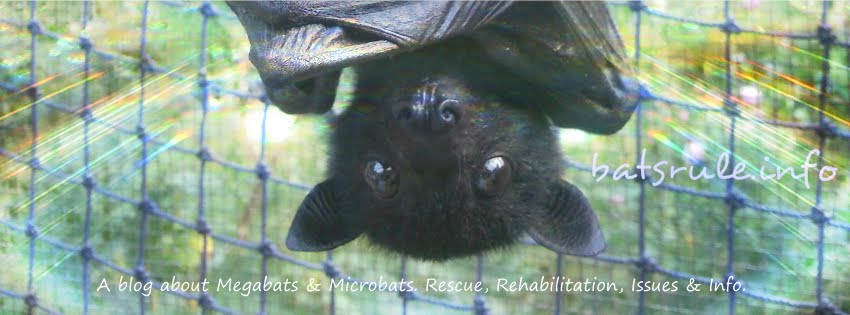 Megabats and Microbats