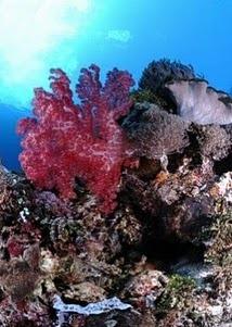 wisata keindahan laut pulau alor