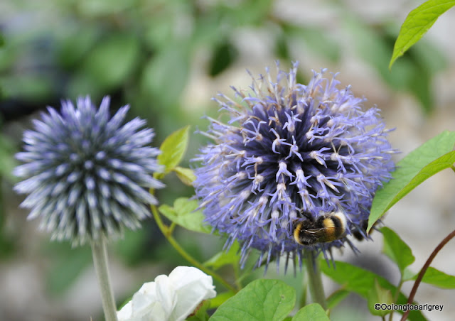 Bee and flower, Hughendon Manor, Buckinghamshire