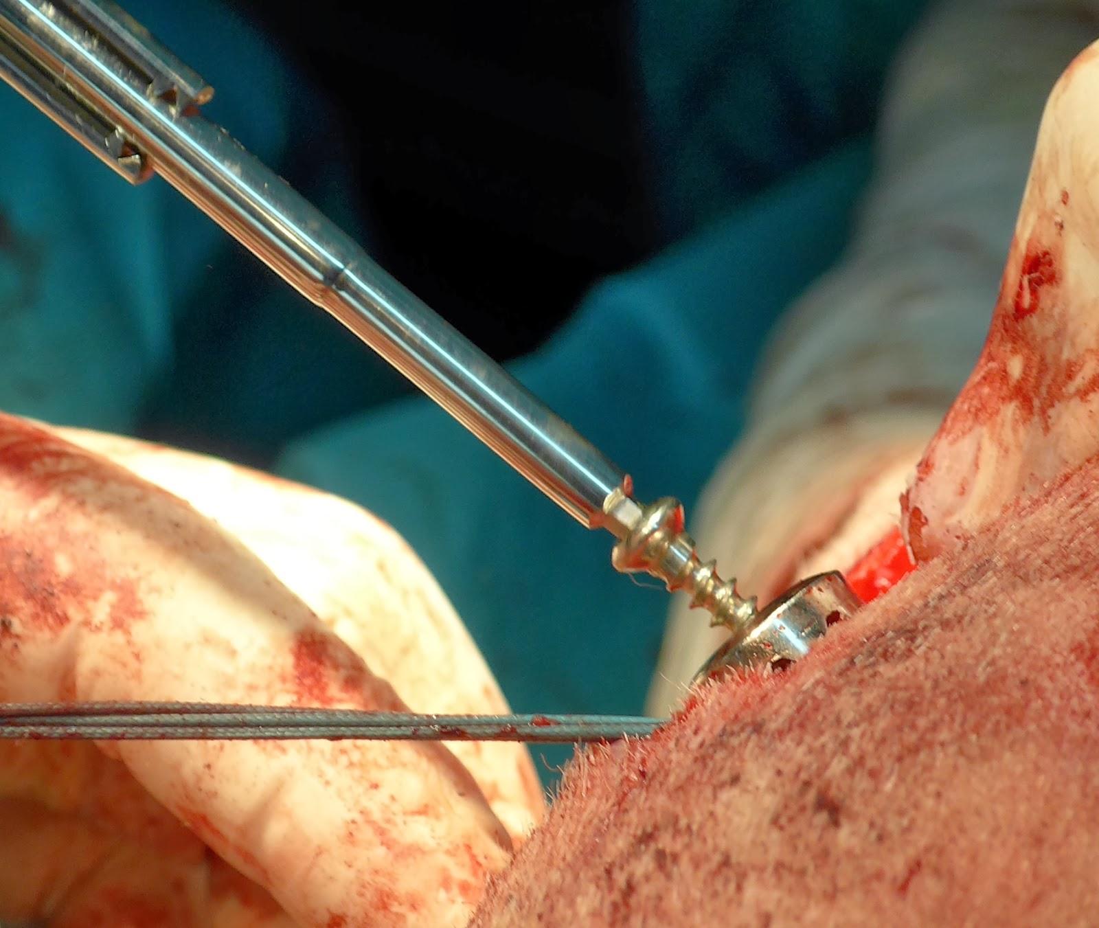 sujeccion protesis biologica del ligaemnto cruzado anterior perro