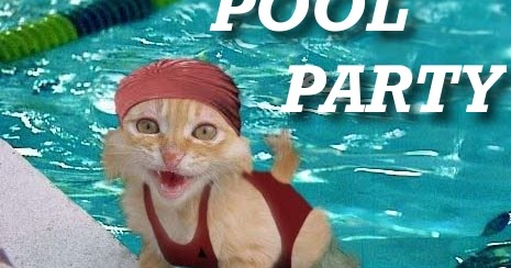 Pool party cat