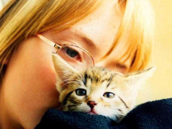 Donos de gatos