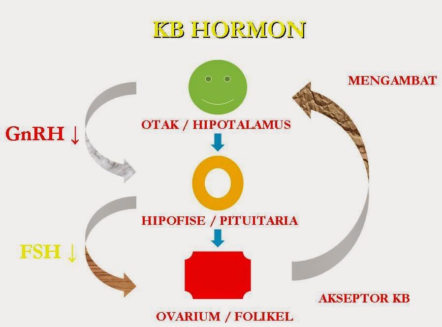 sistem hormon,hormon, kb hormon,diagram hormon