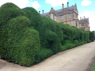 Montacute hedges