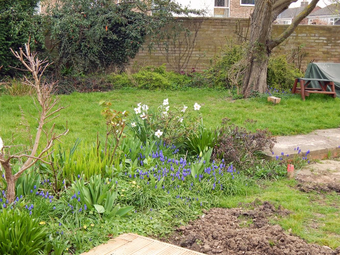 lizzie made springing around in the garden