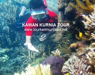 travel tour karimunjawa tahun baru