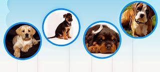 Anjing Puppy Dijual