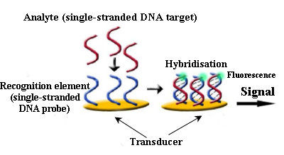 Biosensor for DNA detection