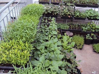 Làm vườn rau tại nhà lam vuon tai nha