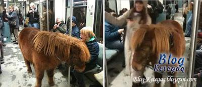 kuda naik kereta api