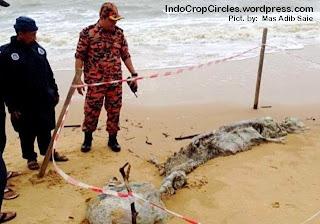 [HEBOH] Bangkai Makhluk Laut Misterius Ditemukan Di Malaysia