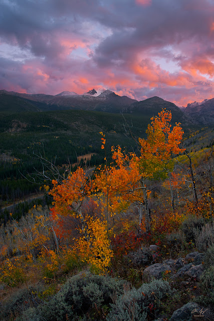 Longs Peak one of the Colorado 14ers at Sunset in Autumn with aspen grove in Rocky Mountain National Park