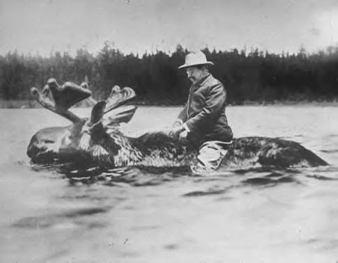 Teddy Roosevelt rides a bull moose