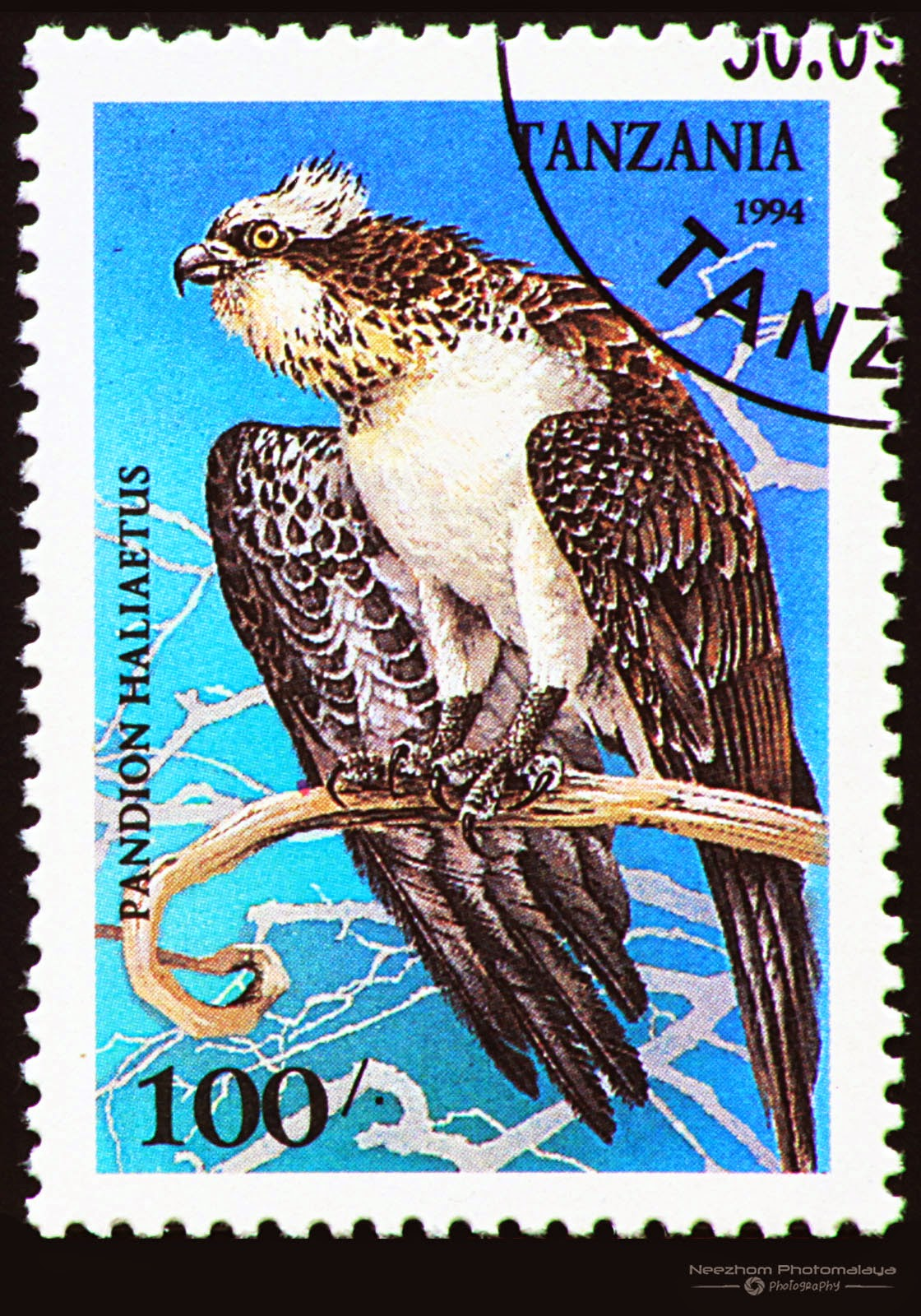 Tanzania 1994 Birds of Prey stamp - Western Osprey (Pandion haliaetus) 100 s