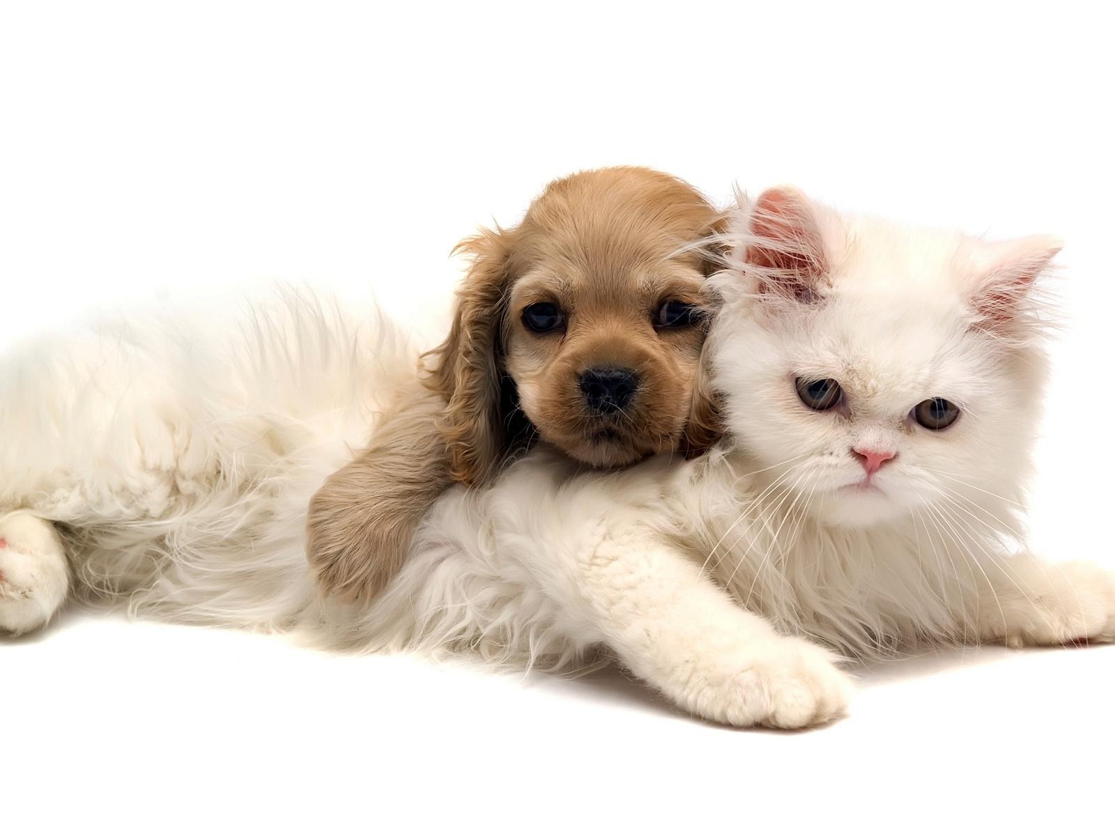 http://4.bp.blogspot.com/-K9gAxxMA-jA/Tf5Os3-wvsI/AAAAAAAAAOA/-5vuBq3lmMw/s1600/Cat%2BAnd%2BDog%2BHD%2BWallpaper.jpg