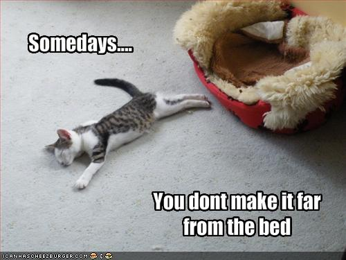 funny cats with funny sayings |Funny Animal