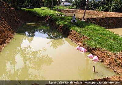ikanairtawar: jenis kolam air tawar