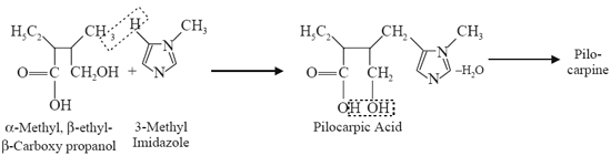 lactone of pilocarpic acid, an acid with a glyoxaline nucleus