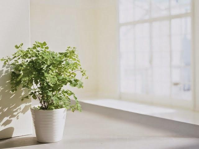 Decoración de Interiores, Plantas Ornamentales