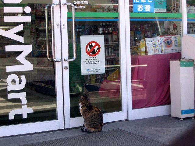 Proibido a entrada de gatos neste estabelecimento