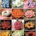 Patrones: Flores a full varios modelos hermosos :)