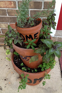 Basil, oregano, lavender and parsley in herb container garden