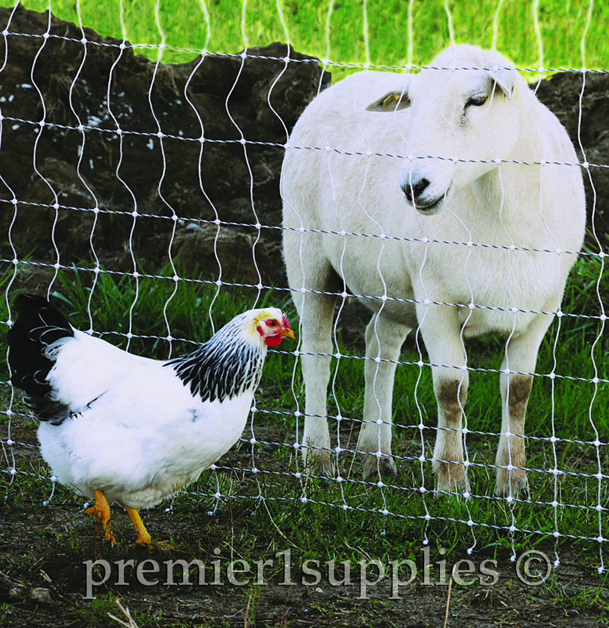 Premier Farm Diary: Before you build a fence…