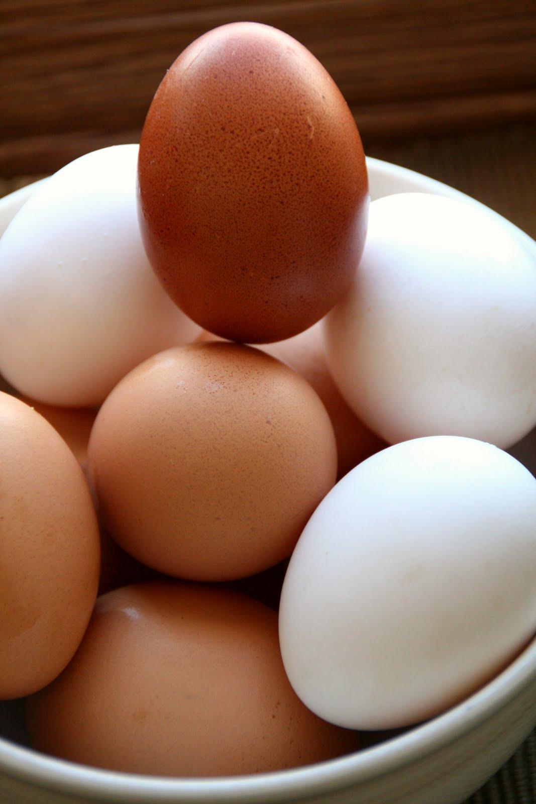 Brazy creek farm first chocolate egg