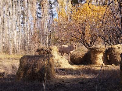 El otoño no precisa poesía...