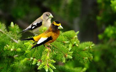 Hermosos pajarillos del bosque - Forrest amazing birds