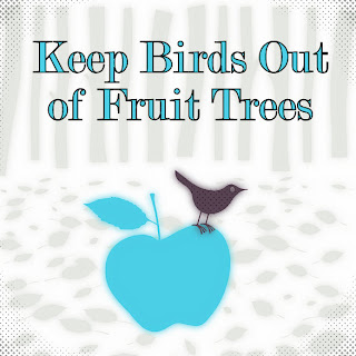 Gardening With Red Hill How To Keep Birds Out Of Fruit Trees