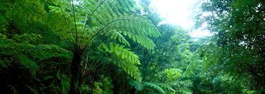 Soil fungi,Latur district, The Journal of Ecology, Photon Journal, Photon Foundation
