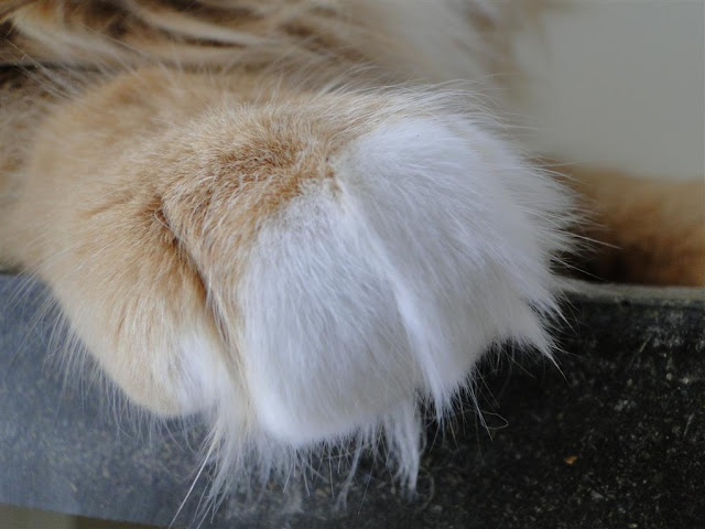 Whose paw is this