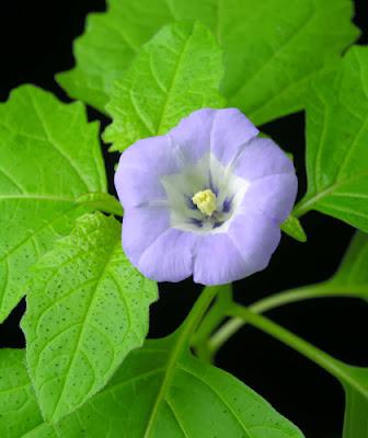 صور ورد روعه, زهور وورود جميلة، صور ورد وازهار
