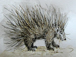 Porcupine watercolor and story