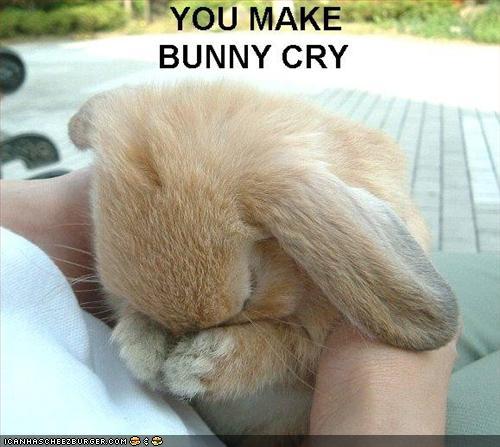 Funny Bunny Rabbit