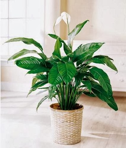 Indoor plants that do not need much light garden park - Low light plants indoor ...