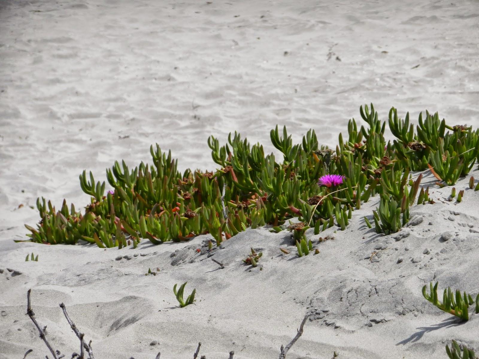san diego coronado beach