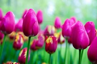 Imagenes de flores con mensajes de amistad Imagenes  - Imagenes Romanticas Con Flores