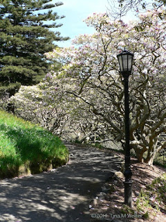 Path with Magnolia trees, Wellington botanic garden, photo ©2014 Tina M Welter