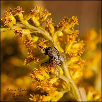 Eine Fliege auf einer Pflanze