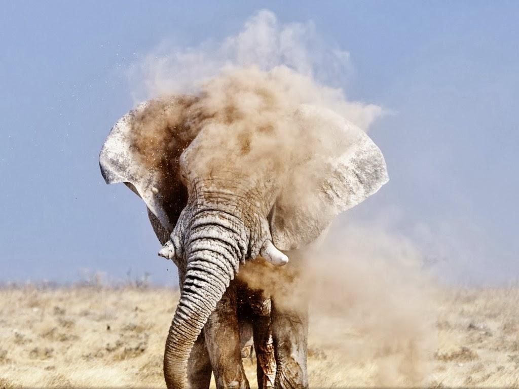 "<img src=""http://4.bp.blogspot.com/-KEx1SKhGag4/UtmWv6WqIOI/AAAAAAAAIrc/jDUC5TPIYLA/s1600/animal-wallpapers-elephant.jpeg"" alt=""elephant in dirt"" />"