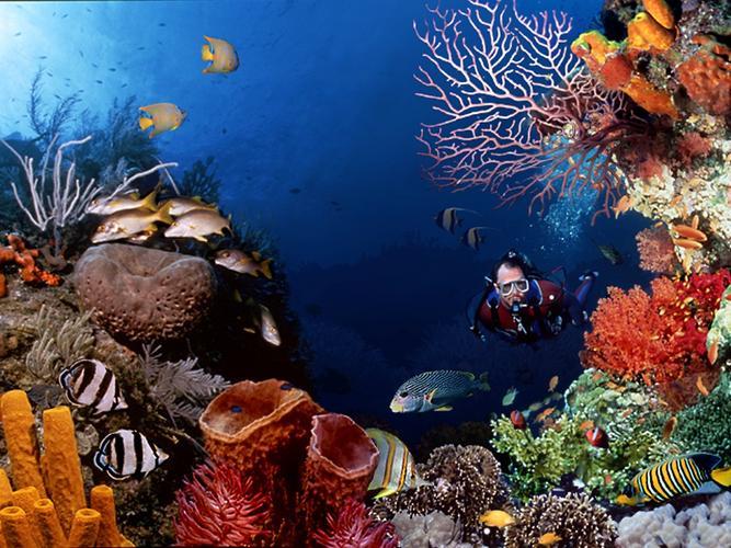 Pesona taman laut bunaken, manado - sulawesi utara