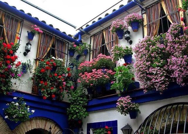 Trồng hoa trên tường