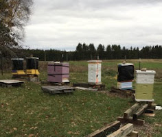 All tucked in at the Club Apiary.