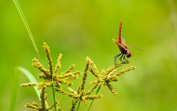A grasshopper at Kaziranga National Park (photo - Nassif Ahmed)