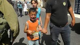 Israel comete Crime de Guerra