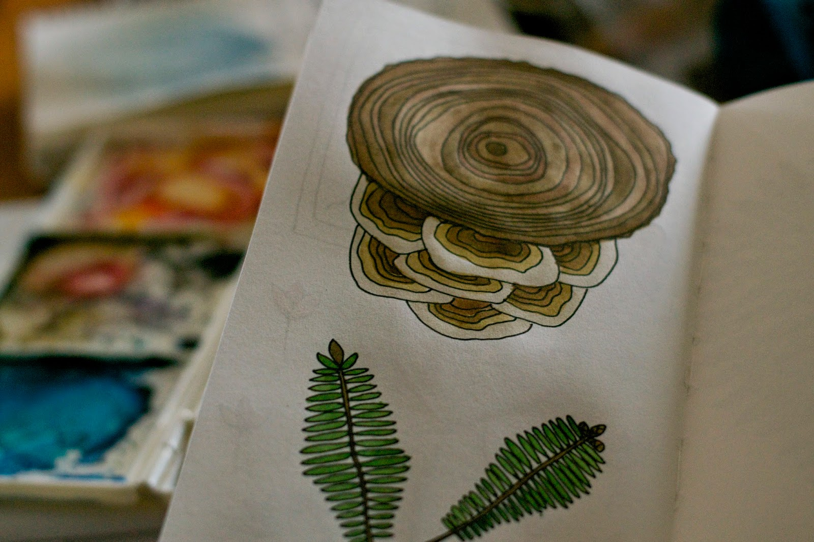 Sketchbook peek: Nature studies from daily walks. Mushrooms growing on a stump and pine branches.