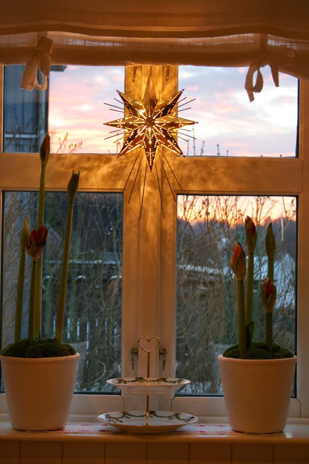 julblommor amaryllis