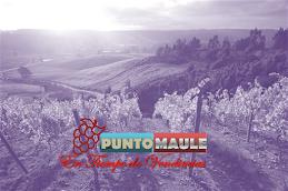 VISITE EL NUEVO PUNTO MAULE